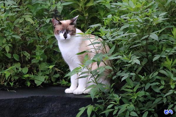 里の猫_2686.jpg